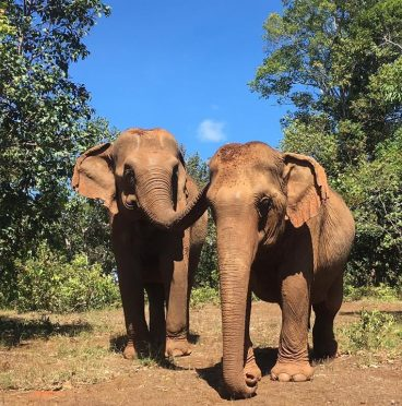 elephant, elie