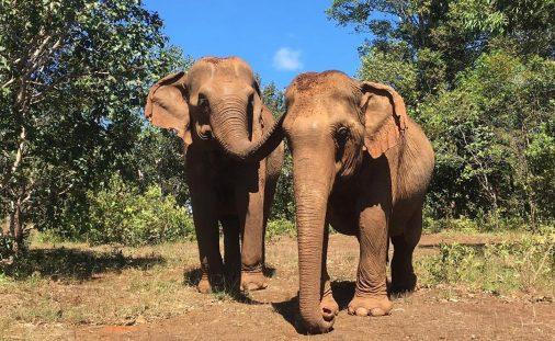 Elephant Livelihood Initiative Environment